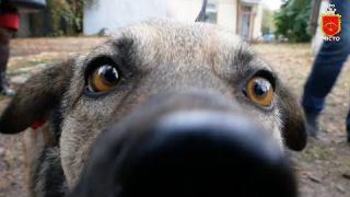 Сьогодні безхатній собака знайшов домівку